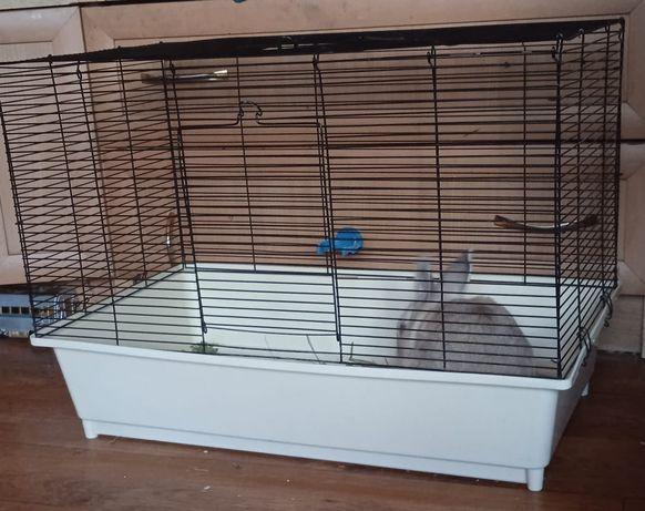 Продам кролика с клеткой