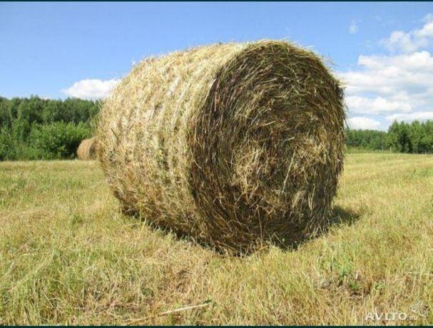 Продам сено в рулонах 300-350кг. Самовывоз погрузка имеется.с.Елецкое