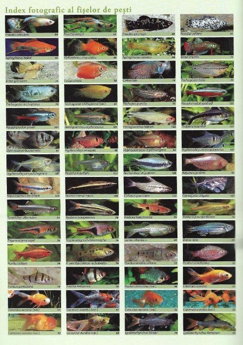Super carte despre acvaristica si pestii exotici de acvariu Bucuresti - imagine 1