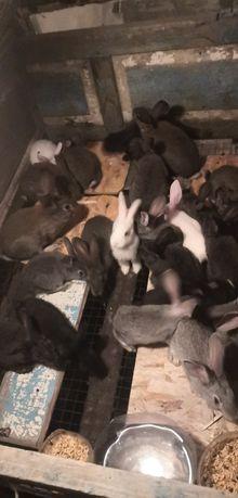 Продам кроликов или обмен