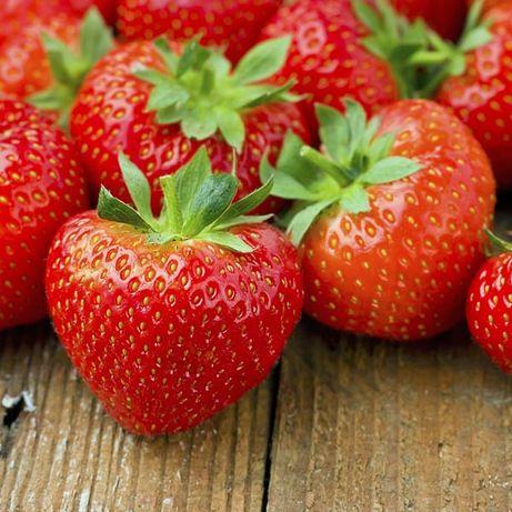 Seminte capsuni fructe delicioase Strawberry