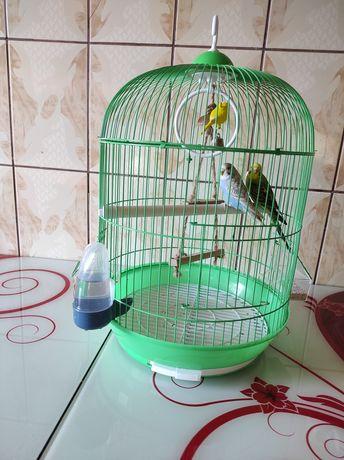 2 papagali (peruși) cu tot cu colivie