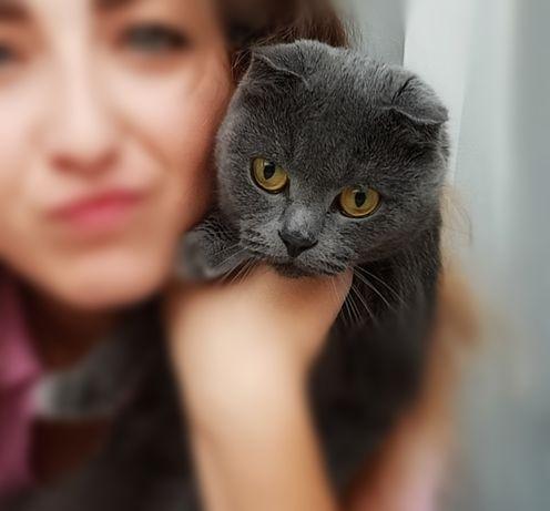 СРОЧНО Ищем котика британца для вязки