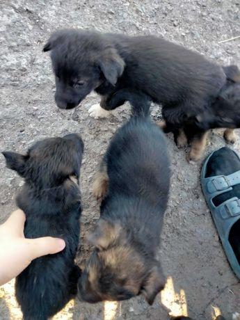 раздадим срочно щенков, всего 8 штук.