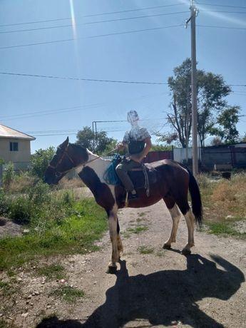 Лошадь  Спокойной можно на табун