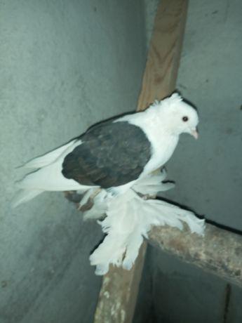 Животные птицы голуби