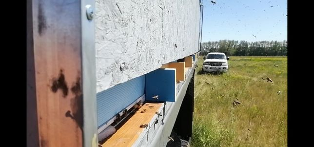 Продам зил 130,седельный тягач, полуприцеп оборудован пчелоповельон