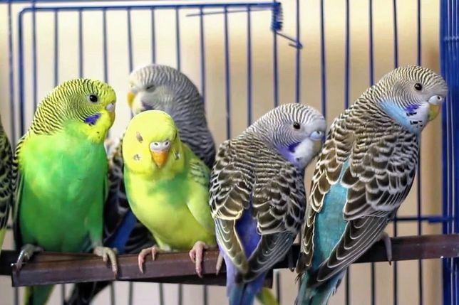 Все в одном месте попугаии