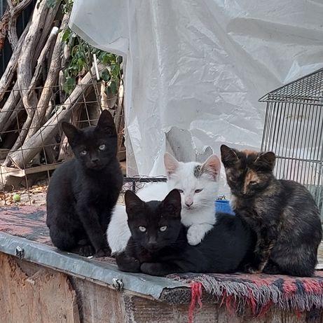 Pisicuti spre adoptie