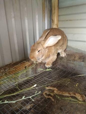 Попадаются кролики от 3000т.