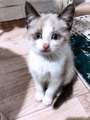 Отдадим котят  в добрые ответственны руки. К лотку приучены, едят всё.