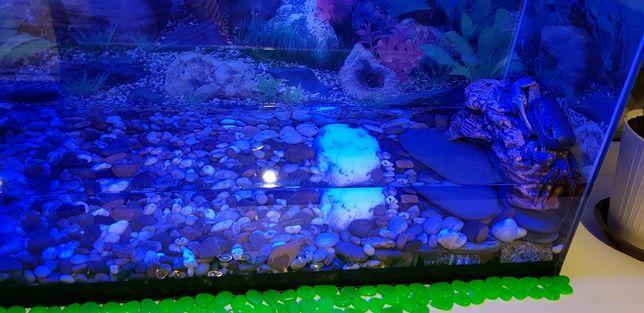 Радужный краб с аквариумом с синей подсветкой и камешками