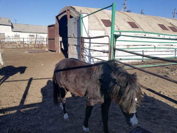 Животноводческая ферма продам
