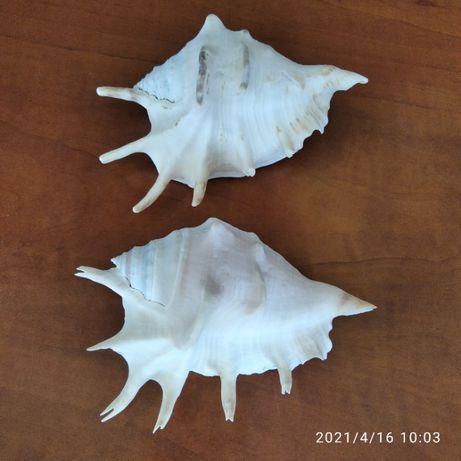 Морски  раковини