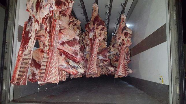 Export carcasa vita vitel manzat vaca mare și halal