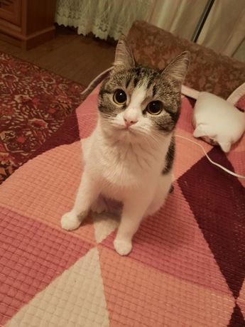 Отдам кошку (1 год и 6 месяцев)
