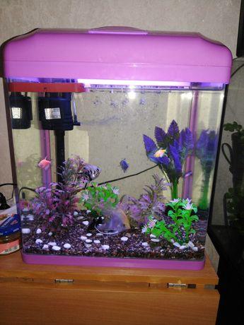 Продаётся аквариум вместе с рыбками.