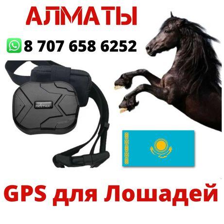 GPS для Лошадей/Жылкыга ЖПС/Малга Арналган Трекер/Су Откызбейды Мыкты