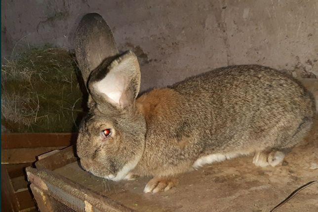 Продам кролика разного возраста