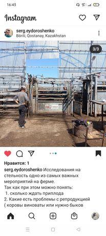 Исследование на стельность крупно-рогатого скота