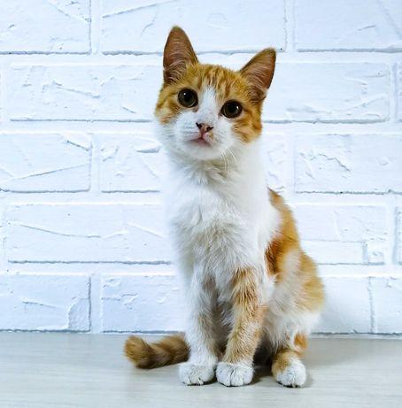 Котёнок-мальчик, 3 мес.