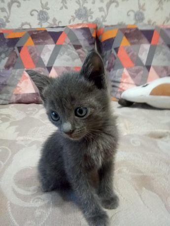 Котенок-мальчик, возраст около 2 месяцев