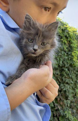 Бесплатно малеький котенок девочка