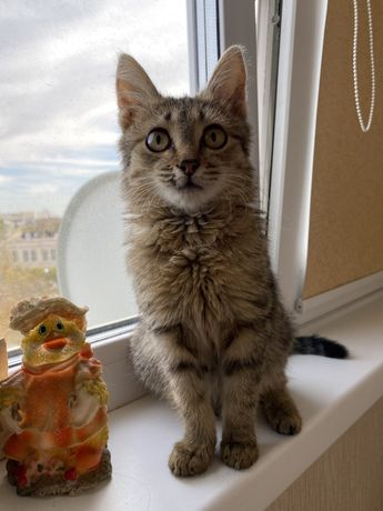 В добрые руки котик