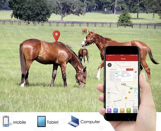 GPS трекер для лошадей//Малға арналған GPS трекеры