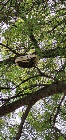 "Безплатно спасявам хващам събирам, ""НЕ УНИЩОЖАВАМ"" рояци пчели-пчелар"