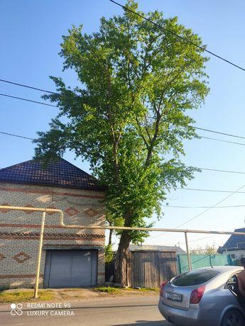 Спилим деревья тополь клён сосна бензопила