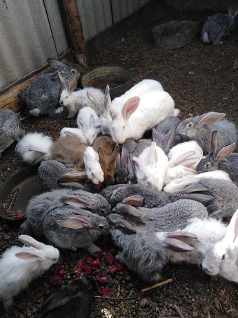 Кролики 1500 тыс