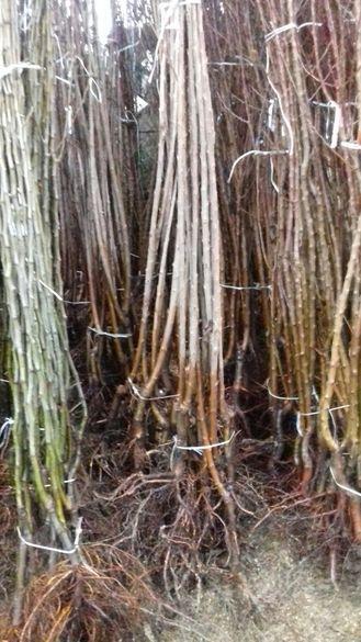 Различни видове плодни дръвчета