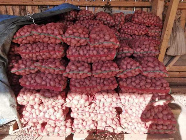 Cartof de consum alb si rosu