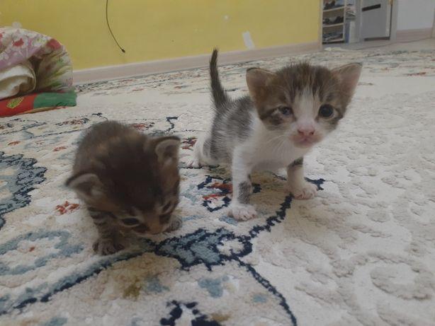 Котята даром котятттаааа