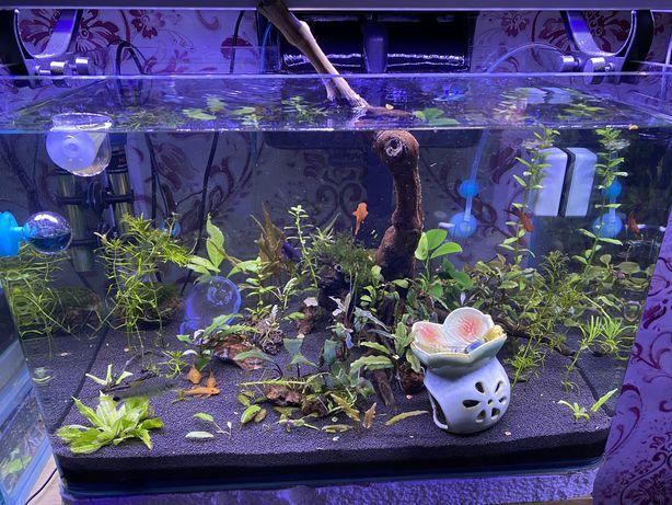Продам аквариум новый