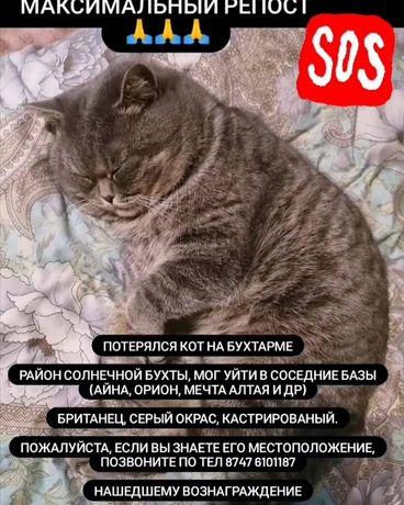 Потерялся кот на бухтарме