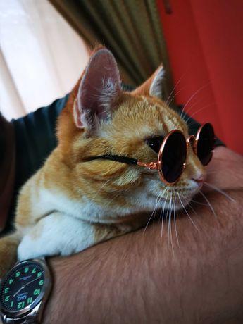 Ochelari pentru animale (pisici, câini)