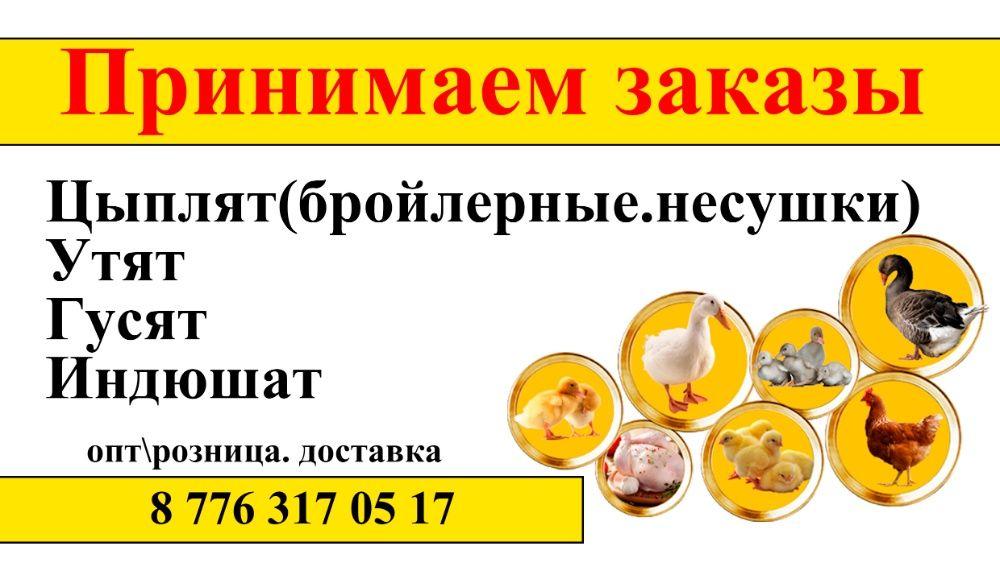 Цыплята бройлеры цыплята, утята и гусят Павлодар - изображение 1