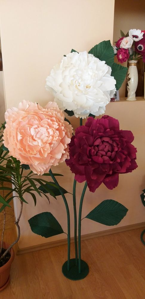 Flori gigant de vanzare Arad - imagine 1