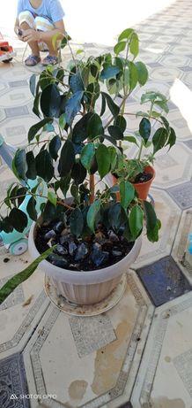 Комнатные растение