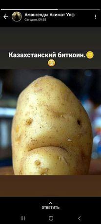 Картофель Нарынкольская