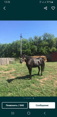 Лошадь с откорма