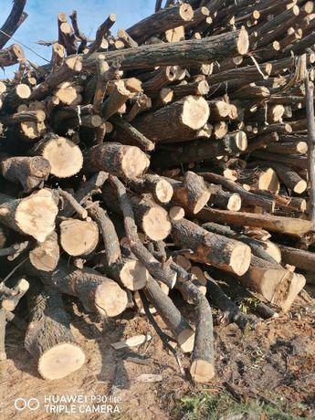 Vând lemne de foc esență tare