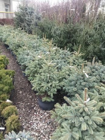 Хвойные деревья и декоративные растения