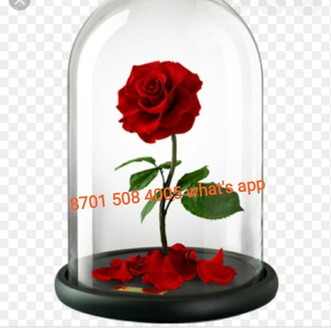 Подарок. Роза в колбе от 5490 тг. ОРИГИНАЛ.