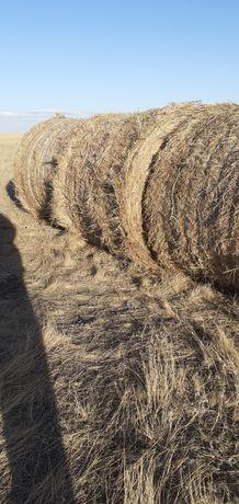Продам рулоны сена