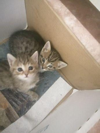 Животные котята, 4 котенка