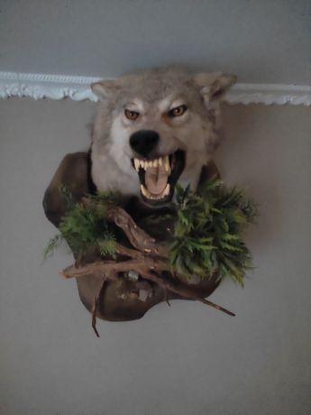 Чучело волка.      .
