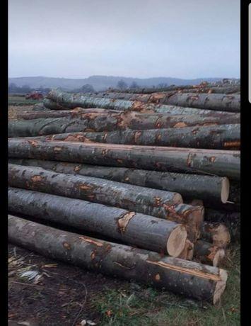 Vand lemne de fag